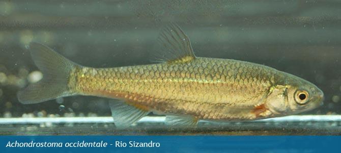 Fish and shellfishoutlander lists  & timelines list