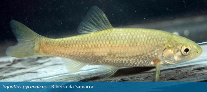 Fish And Shellfishoutlander Lists & Timelines